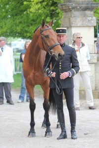 Jean Tealere and Matelot Du Grand Val at Badminton 2011, photo by and with enormous thanks to Samantha Clark.