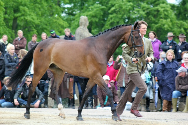 Lionheart with previous jockey William Fox Pitt. Photo by Samantha Clark.