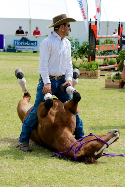 Double Dan Horsemanship Performance during a break