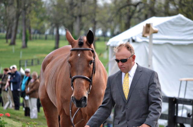 Buck Davidson and Ballynoecastle RM. Photo by Jenni Autry.