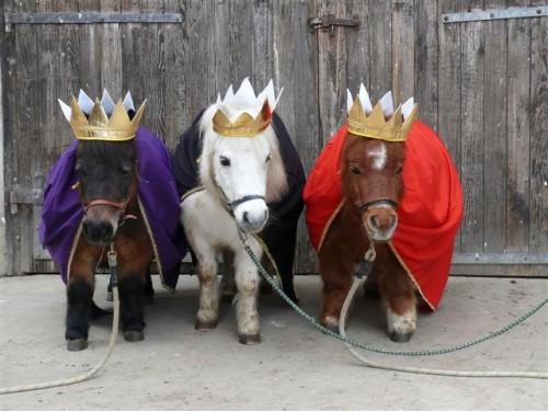 top five halloween costumes for your horse eventing. Black Bedroom Furniture Sets. Home Design Ideas