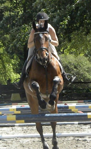 How is your horse with gymnastics eventing nation three day how is your horse with gymnastics sciox Choice Image