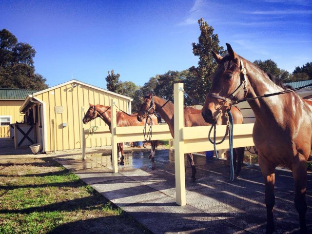 Walk The Line, Buenos Aires and Ringfort Tinkaturk at the Ocala Eventing 25 training camp. Photo via the USEF Eventing High Performance Facebook page.