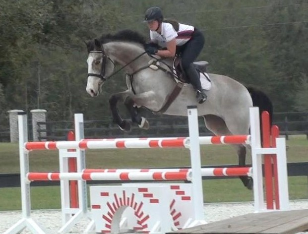 Hanna and Mustard schooling at home with Jessie Phoenix. Photo from Hanna Bundy.