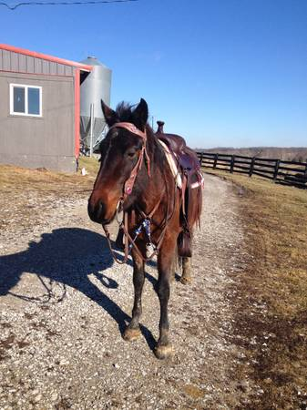 Craigs List Lexington Ky >> Best of Craigslist: Double Regetered Friesian sport horse ...