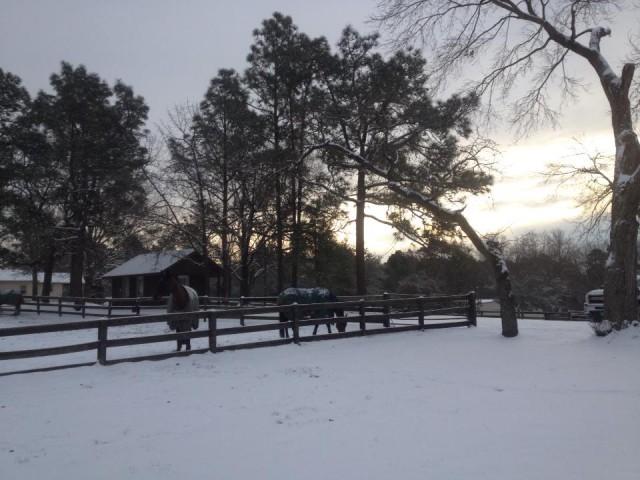 Denny Emerson's Tamarack Hill Farm in Southern Pines, N.C., following last week's snowfall in the south. Photo via Daryl Kinney.