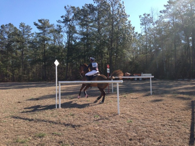 William Robertson and his horse Harley Goldsmith leaving the startbox on their first preliminary (they finished second!). Photo via Kristen Wiley.