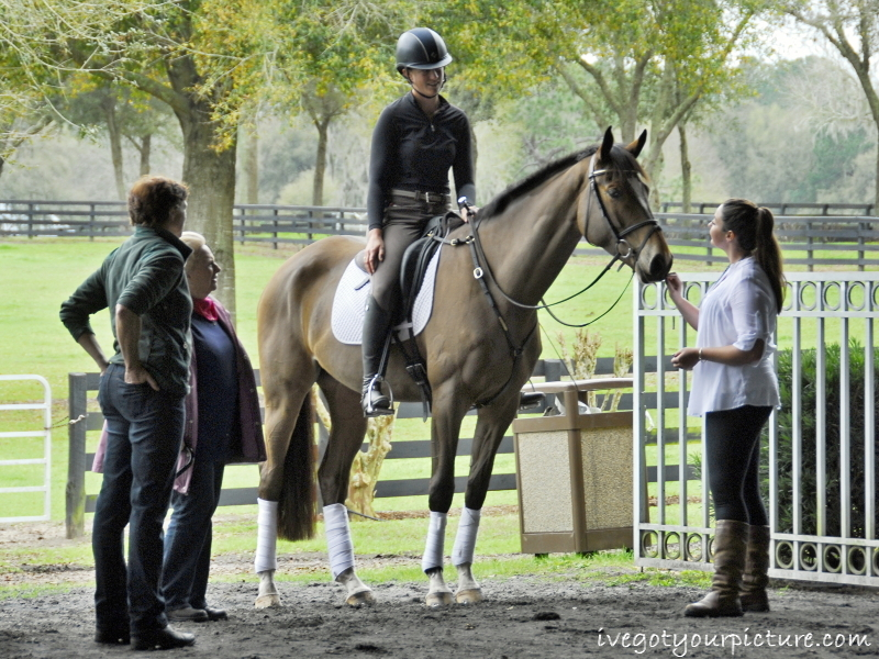 Lauren Kieffer rode a five-year-old in the Young Event Horse dressage evaluation.