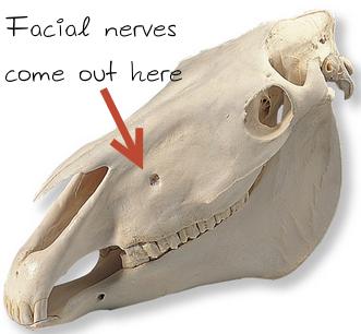 [Skull:Kappmedical.com]