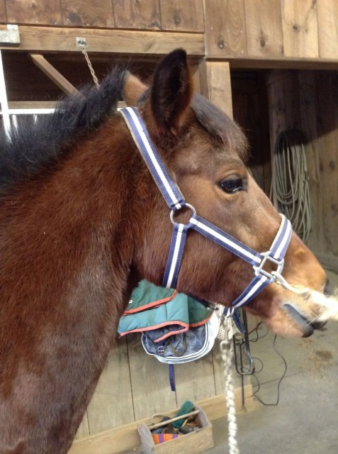 Chai the super pony!