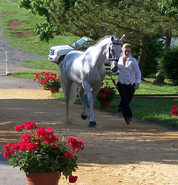 Natalie Lester, Janet's daughter, and Flag jogging up at the Virginia Horse Park in her first one-star, where they finished fifth. Photo by Mike Stewart.