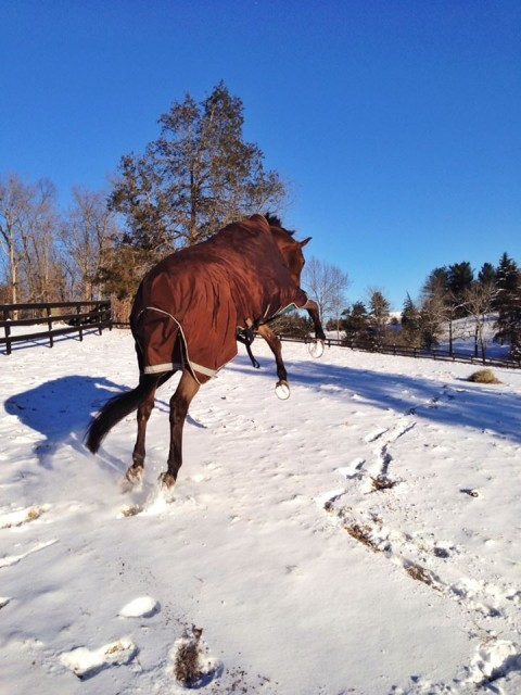 At least he's having fun with it (Nyls loves winter). Photo by Kate Samuels