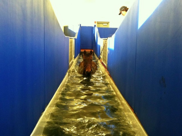 My horse Esprit on the Aquatred at the University of Tennessee Veterinary Medical Center.
