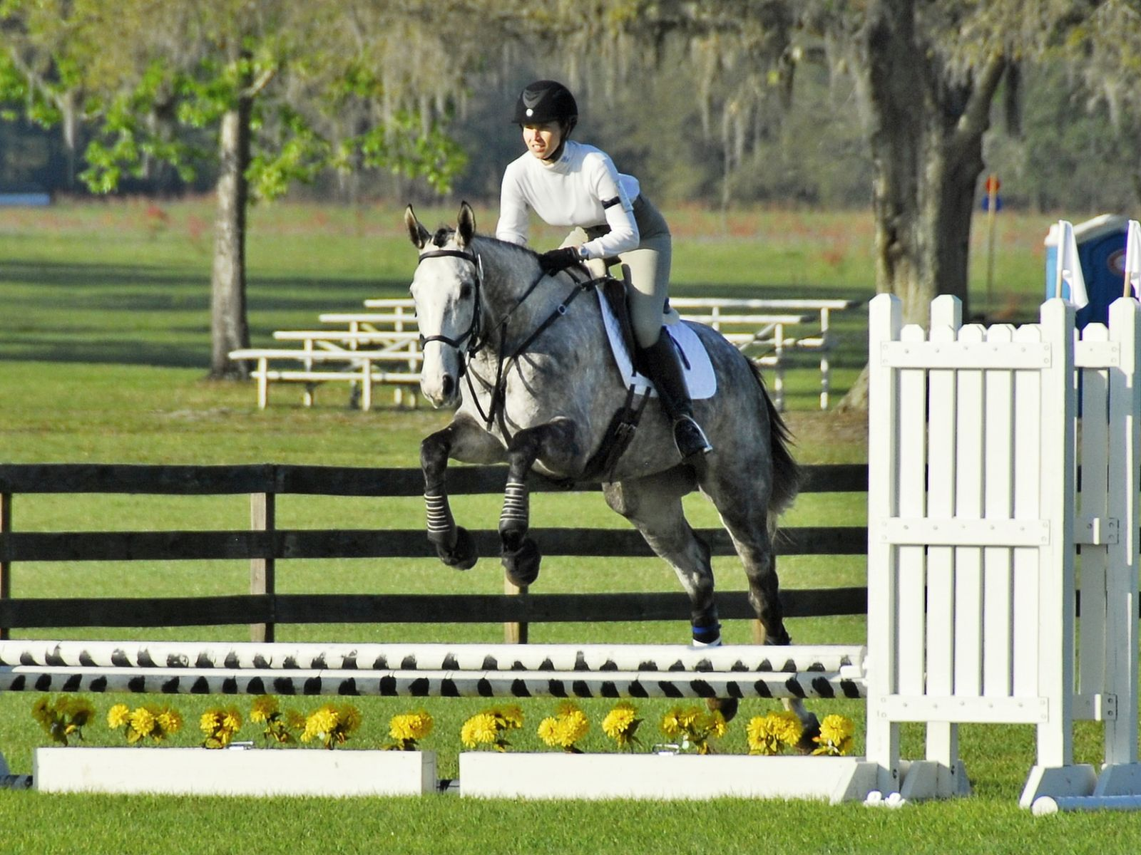 The four-year-old gray filly did well in her first show jumping course.  Photo by Ivegotyourpicture.com.