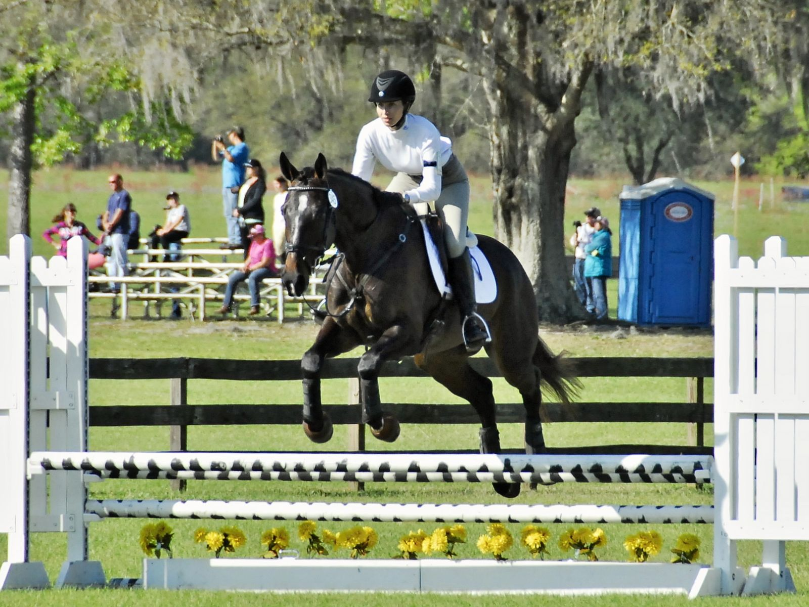 Aero overcame his anxiety enough to jump a clear round for his first time at a show.  Photo by Ivegotyourpicture.com.