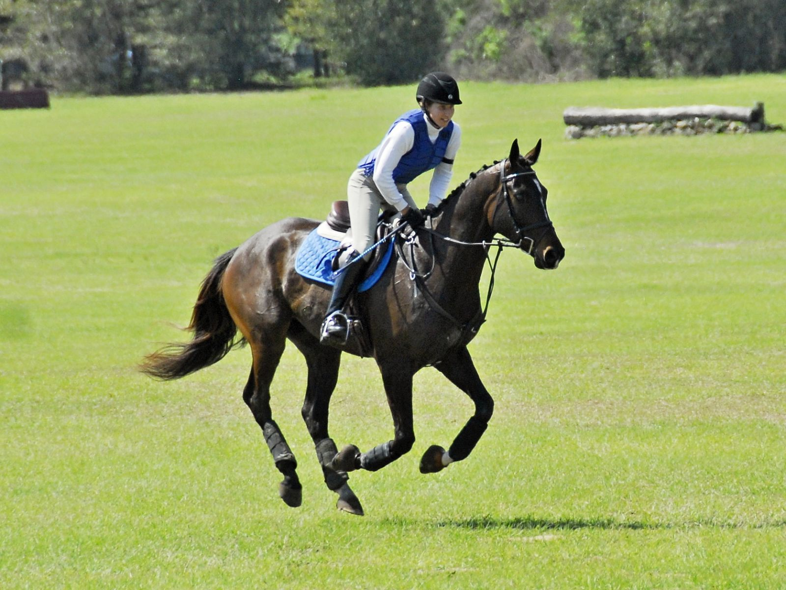 Aero gallops around his first full cross-country course at Beginner Novice. Photo by Ivegotyourpicture.com.