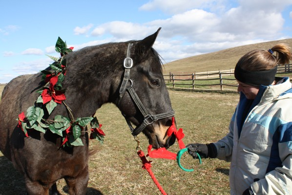 Mikey helping with a Christmas photo shoot for CANTER. Photo by Kelly Utter.
