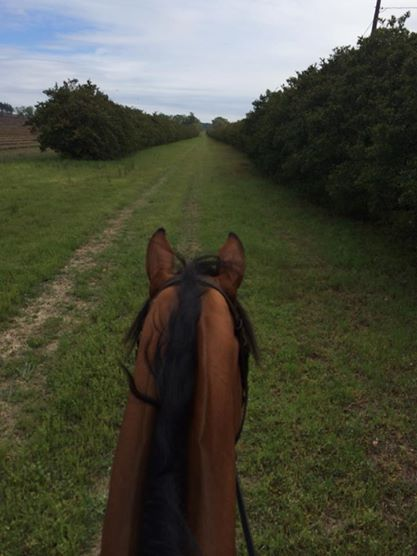 """Final gallop!! Rox feels great!! See you all in a few days "" From Kristin Schmolze's FB page."