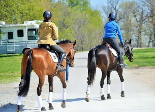Laine Ashker and Anthony Patch and Kim Severson and Fernhill Fearless out for a hack this morning. Photo by Sally Spickard.