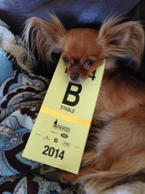Elisa Wallace's dog, Pocket, is ready to head to Rolex for Fledge and Rune's mustang demo!
