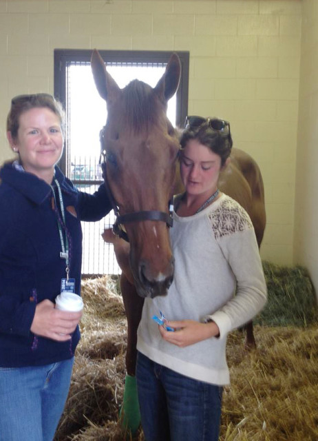 Expedience recovers from surgery at Rood and Riddle. Photo via Kaitlin Spurlock's Facebook page.