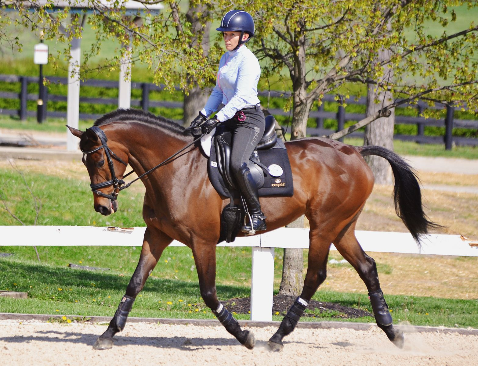 Ask The Experts Presented By World Equestrian Brands