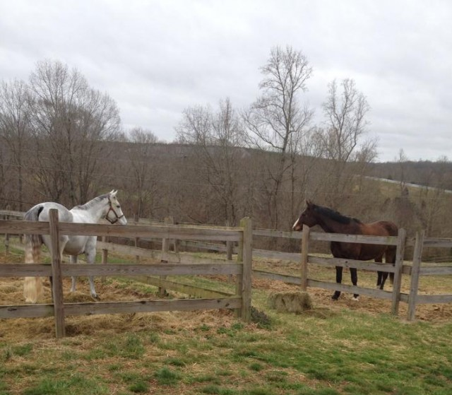 Tupelo and Eowyn enjoy some downtime at Meadow Run Farm. Photo by Jana Lyle.