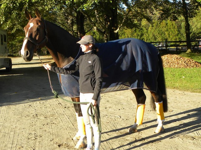Skybreaker looking large and handsome before an outing!