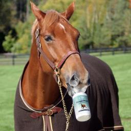 omega alpha horse