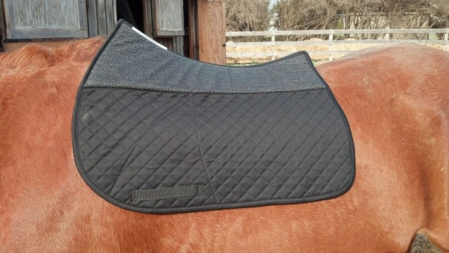 Profile view of the Success Equestrian Pad, contouring to Ripley's spine