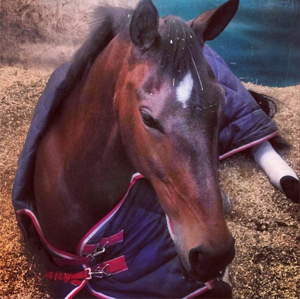 Gin & Juice having a nap and contemplating her inevitable cross country domination. Photo via Hawley Bennett's Instagram.