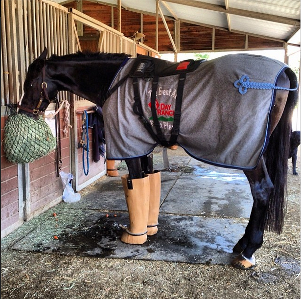 Jennifer McFall's High Times relaxes after a gallop. Photo via Hawley Bennett's Instagram.