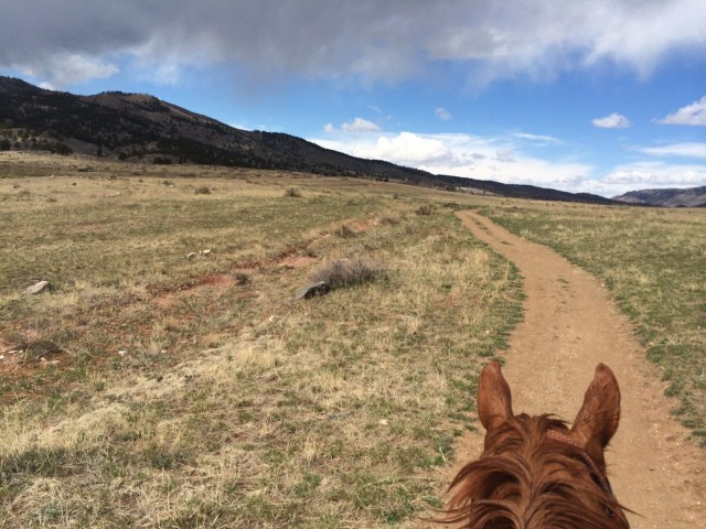 "Angelika Beutel: ""This picture was taken last Sunday in Loveland, Colo. My horse Varekai, an 11-year-old Swedish Warmblood, got to go on a trail ride in the Colorado mountains before we are heading out to Arizona for our first prelim HTs of the season."""