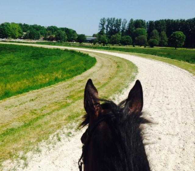 Doug Payne's view from Crown Talisman in Chantilly, France.  Photo via Doug's facebook page.