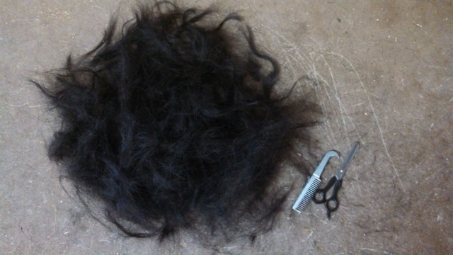 The Great Mane Massacre of 2014. Photo by Lindsey Kahn