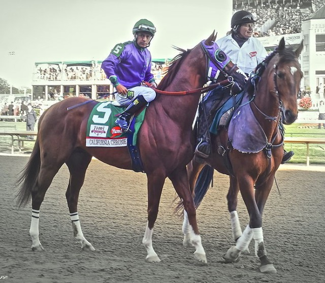 California Chrome at the Derby.  Photo via Wikipedia Commons.