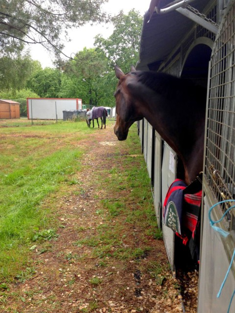 Tali checking out his new neighbors. Photo by Doug Payne.