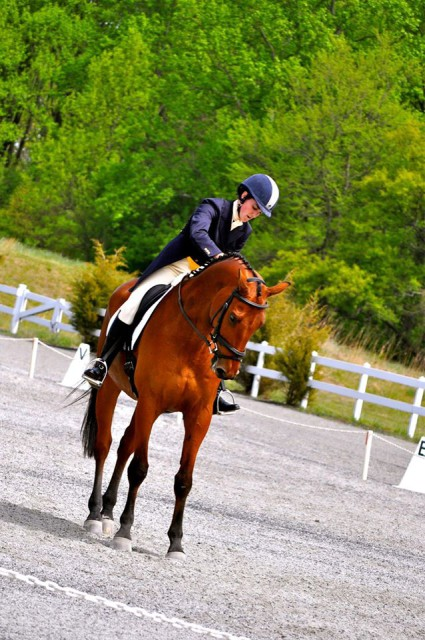 TBT to Fair Hill Advanced in 2012....calming of the beast after dressage! Photo by Addie French.