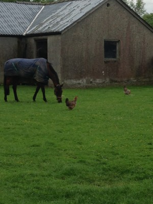 Rupert with Tim Price's chickens. Photo via Rebecca's blog.