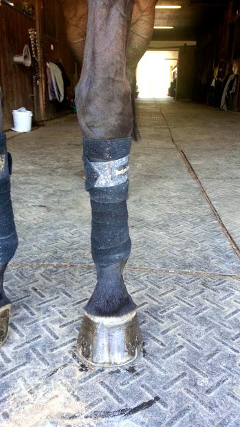 Sasha rocking the Gimme Gold Hoof polish and Back On Track wraps after her flat school