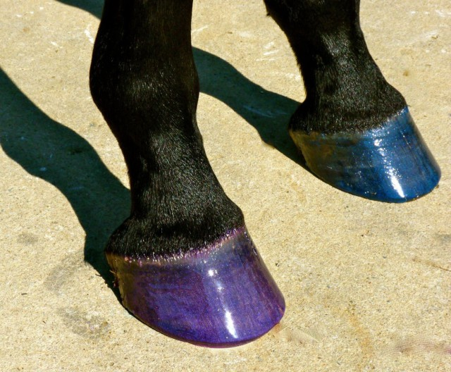 Hoof polish in purple and blue