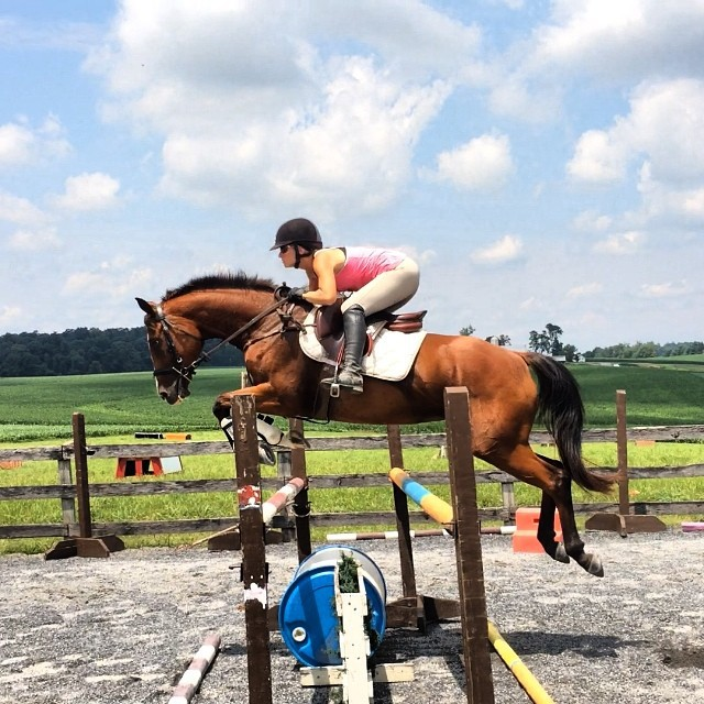 One of the cutest horses competing this weekend at Maryland HT: PL Trinity, offered for sale by Defying Gravity Eventing.