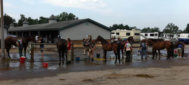An extremely rare photo of the KHP wash rack in which none of the participating horses are grey, pinto, or otherwise visibly spotted...