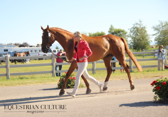 Photo by Leah Anderson / Equestrian Culture Magazine.