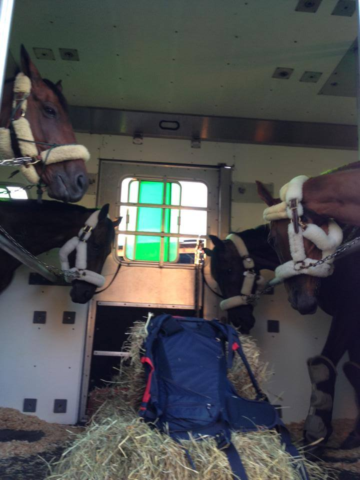 Horses on a plane! Photo courtesy of the USEF High Performance FB Page.