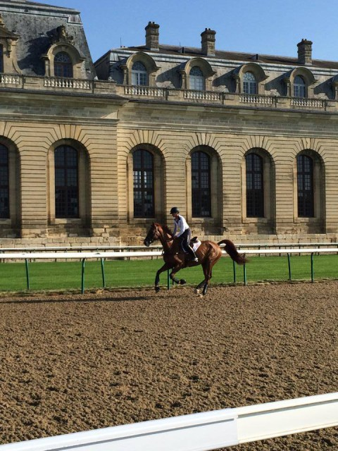 Sinead and Tate gallop at Chantilly Racecourse. Photo from USEF High Performance Facebook.