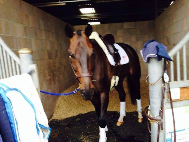 Fernhill By Night relaxes after a great dressage effort at Hartpury. Photo via Liz Halliday's Facebook page.