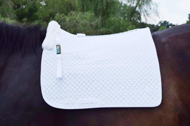 I like the clean and crisp appearance of the Fleeceworks Therawool Dressage Square Pad. Photo by Lorraine Peachey.