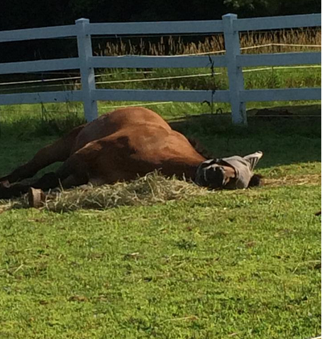 Enjoying a nap on the hay pile!