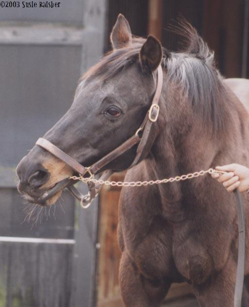 Donner's grandsire, Smarten, at age 17 in 2003. Photo courtesy of finalturngallery.com